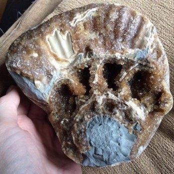Calcite in ammonite, Black Ven, Lyme Regis, Dorset